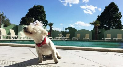 Vacanze animali a Rimini Mypethotel.it