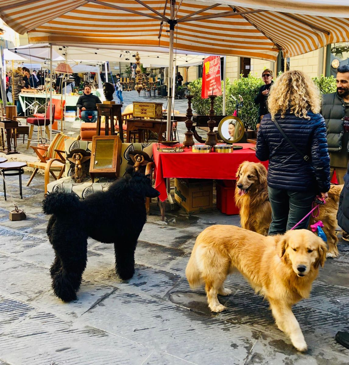 Arezzo con il cane Mypethotel.it