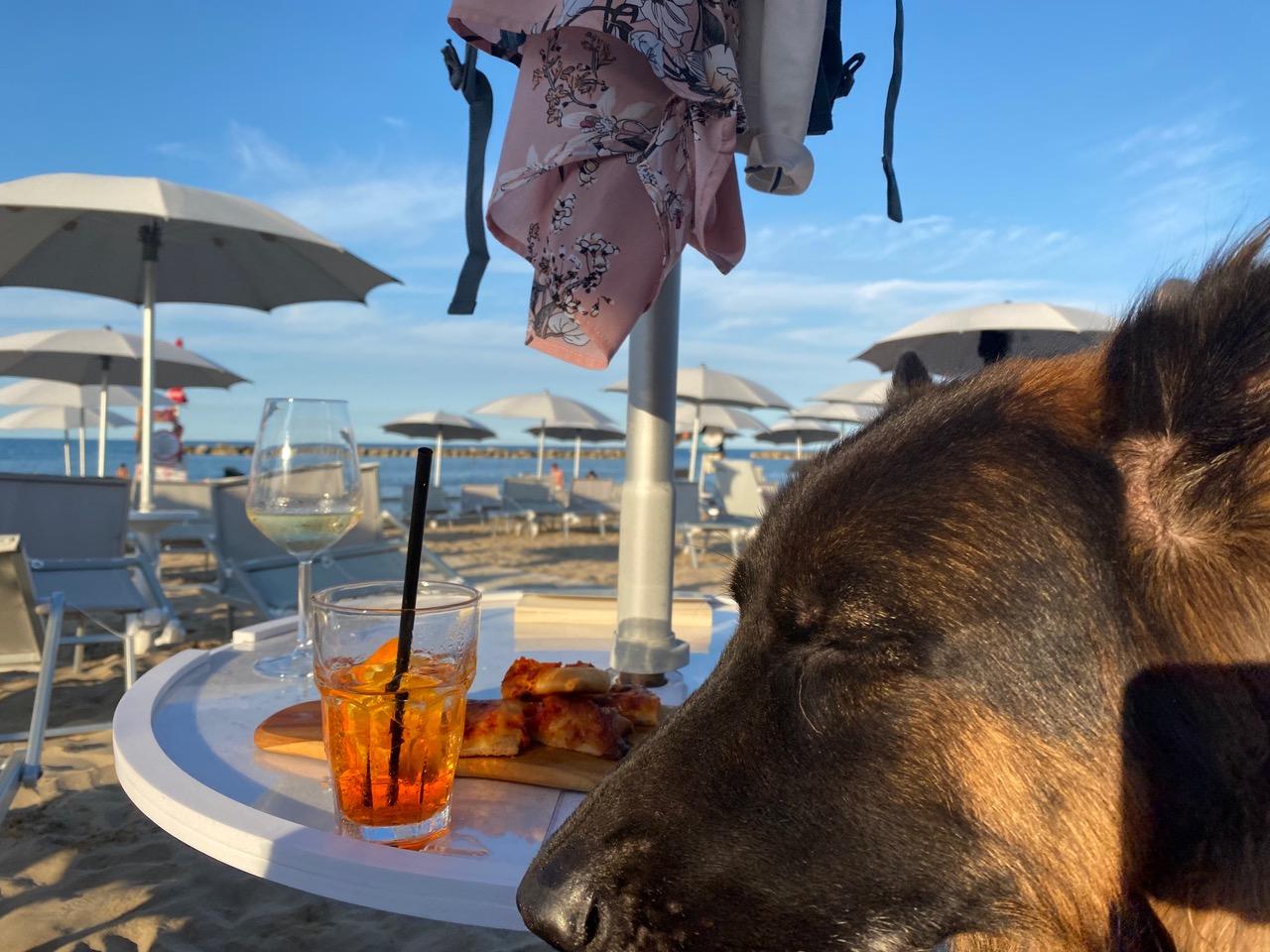 animalido dog beach Fano Mypethotel