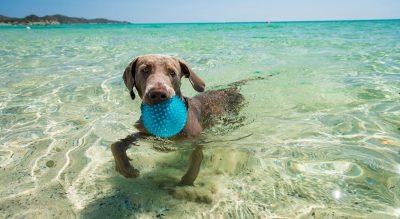 Spiaggia Pet Friendly Sardegna