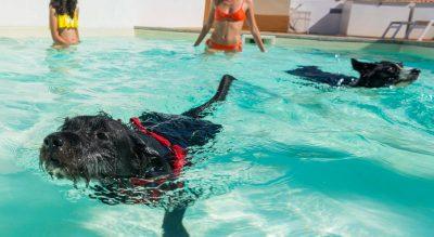 piscina per cani tiliguerta villaggio sardegna