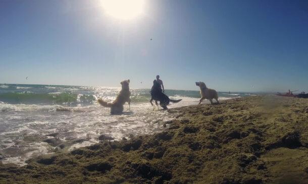 Bau Beach Maccarese Lazio Mypethotel