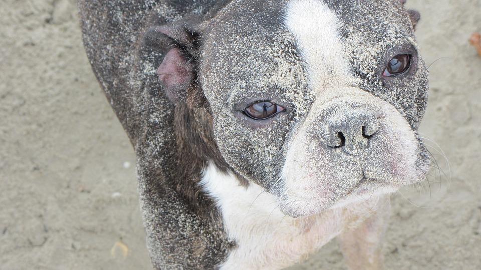 Bau vacanze a Cattolica con il cane Mypethotel.it