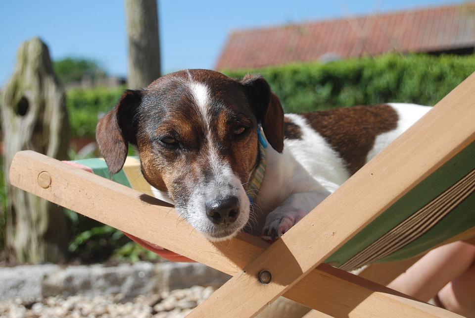 Vacanze con il cane in Liguria Mypethotel.it