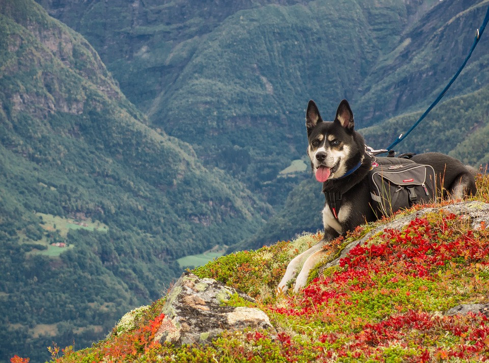 Dolomiti trentino alto adige con il cane Mypethotel.it