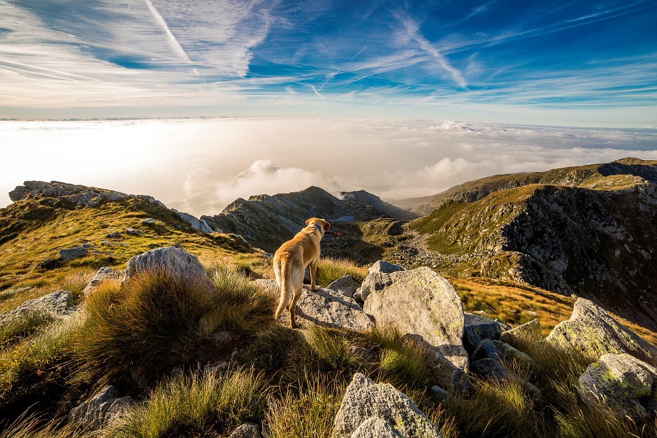 Vacanze con il cane in Valle D'Aosta Mypethotel.it