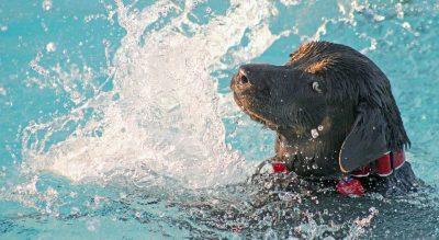 Hotel Kristalex Cesenatico piscina per cani