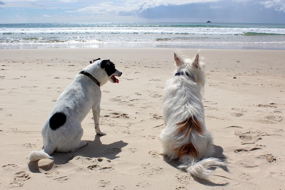Gargano e Puglia in vacanza con il cane Mypethotel.it