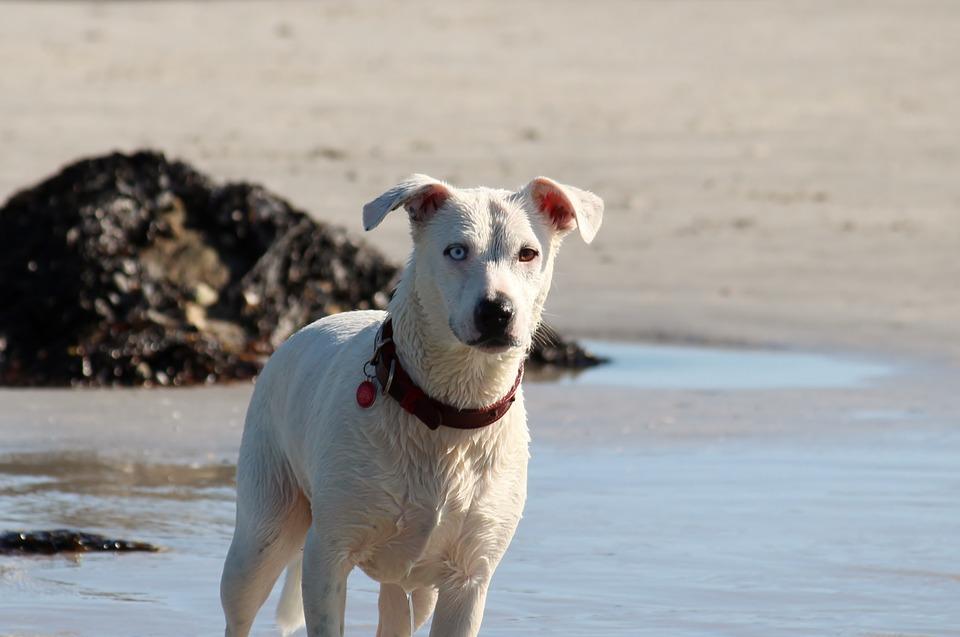 Vacanze a Ischia con il cane Mypethotel.it
