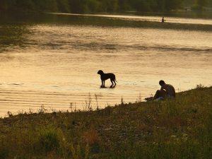 vacanze con il cane in montagna Mypethotel.it