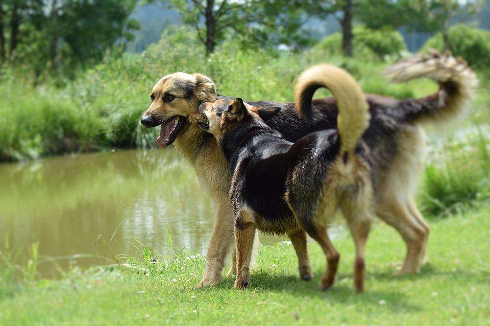 Vacanza con il cane Lago Trasimeno