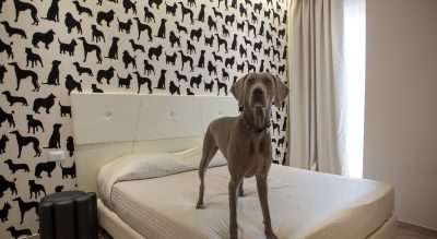 i love dog hotel pet friendly Mypethotel.it