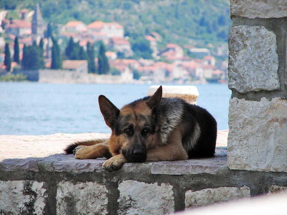 Vacanza con il cane Lago di Como Mypethotel.it