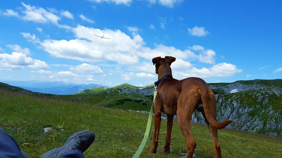Vacanza con il cane a Trento Mypethotel.it